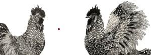 rooster14.jpg