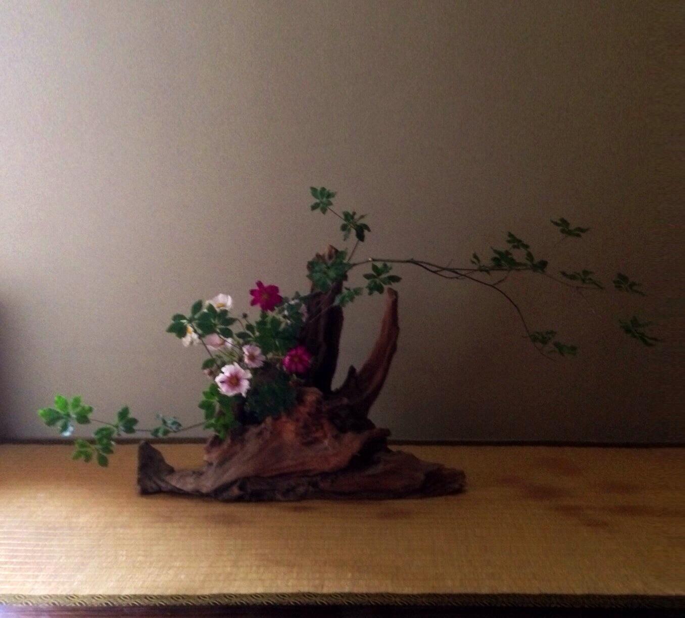 Flower Arrangement Using Driftwood: Autumn Flower And Driftwood €� Ikebana